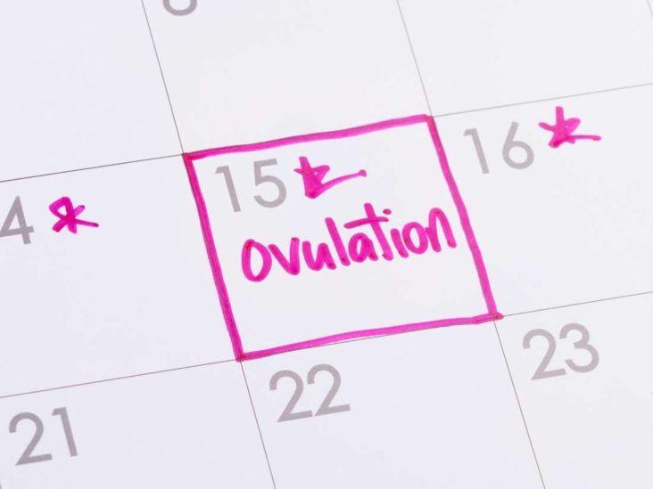 Ovulation after miscarriage: When it might restart and signs