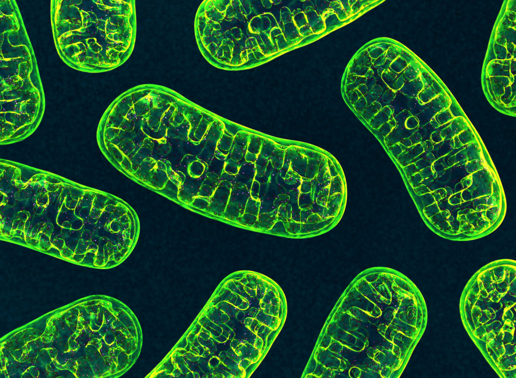 How mitochondria respond to exercise, high fat diet