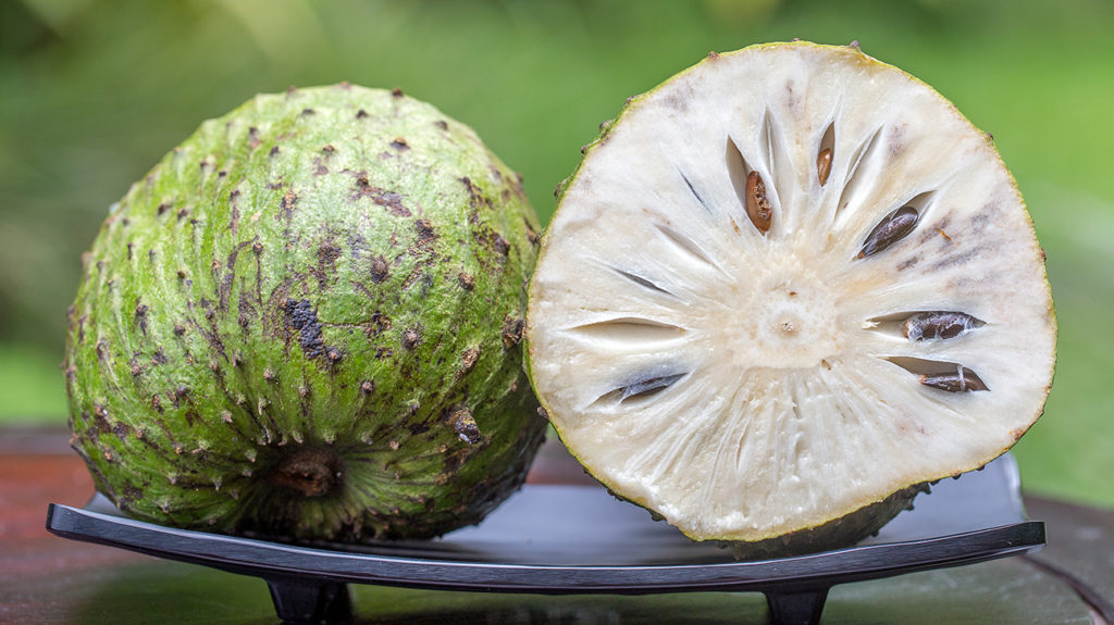 soursop which might be used to treat cancer