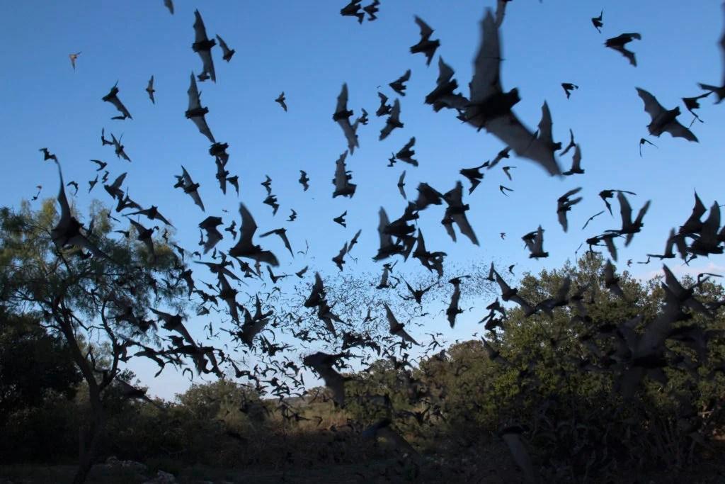 Chauves-souris volantes dans le ciel nocturne