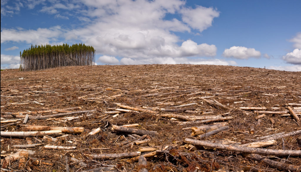 image of logs left after deforestation