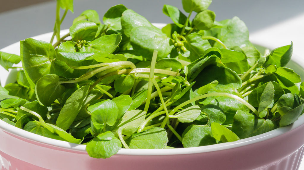 a bowl of watercress which is one of the best vegetables for protein