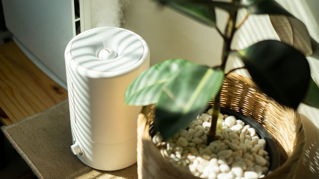 The best humidifier in the house is shown next to a plant by a doorway.