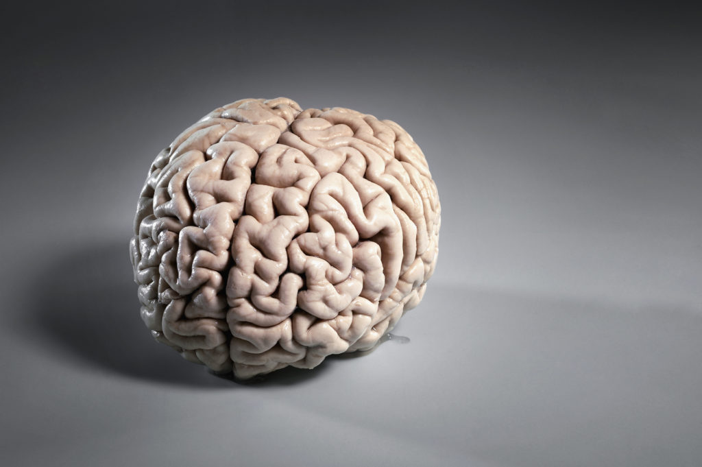 Brain on plain background