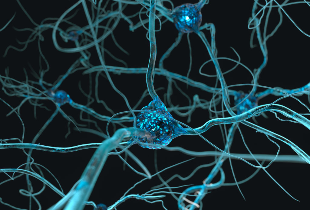 close up of a neuron