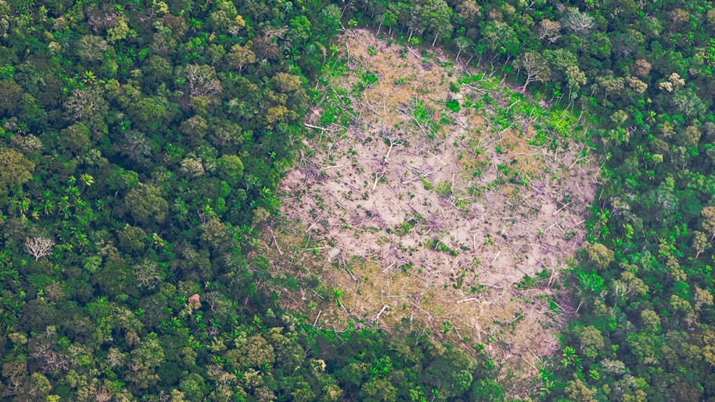 a patch of deforested land in the rainforest