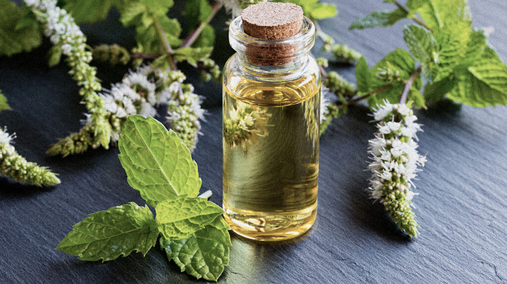 An image of peppermint oil, which may offer people benefits.