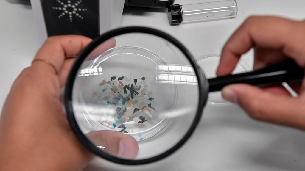 A biologist looks at microplastics found in sea species at the Hellenic Centre for Marine Research near Athens, on November 26, 2019. Image credit: Louisa Gouliamaki/AFP via Getty Images