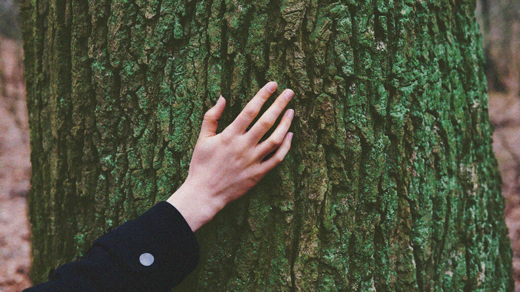 Close up of a hand touching a large tree.