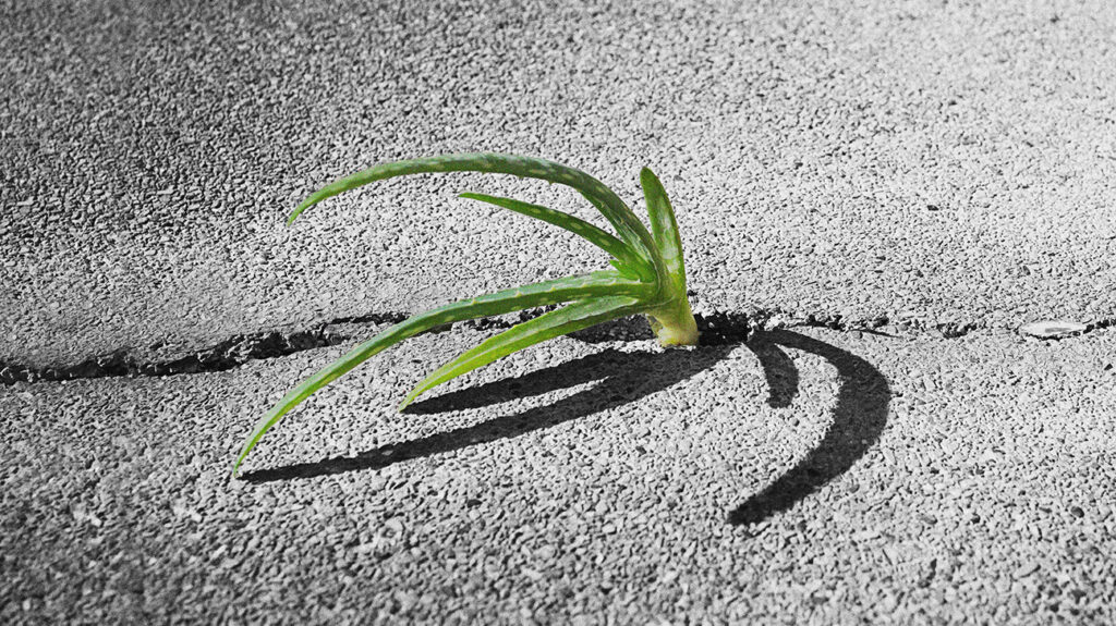 A plant growing through asphalt