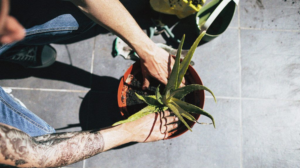 a person is repotting an aloe vera plant on a tiled floor