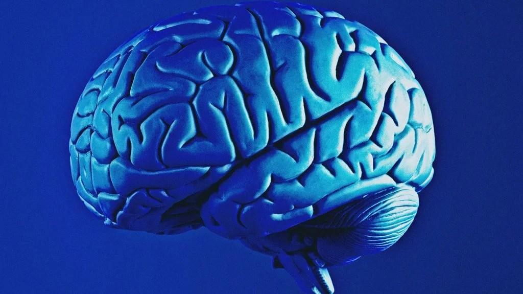 蓝色和紫色模拟脑
