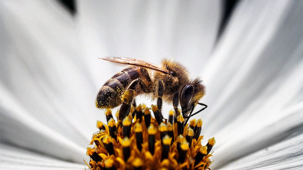 Steroid injection for bee sting is steroids addictive