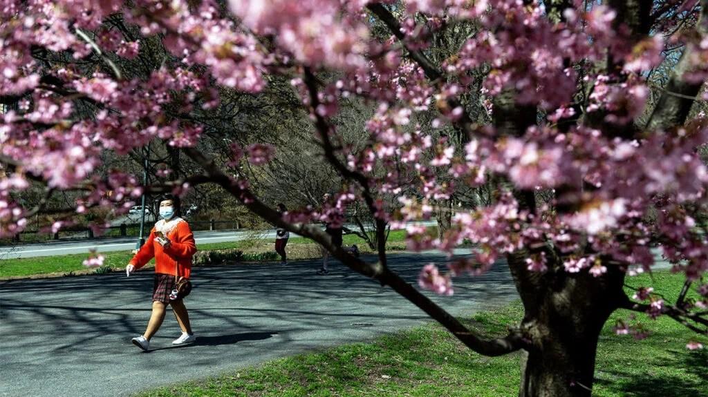 戴着口罩走过公园的人