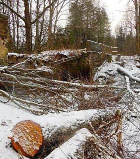 Поставский лесхоз попросил экоактивистов сообщать о нарушении лесного законодательства