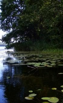 Озеро Глодово (поставский район)