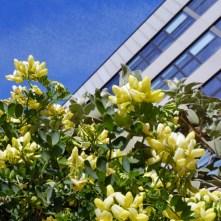 10. Yellow