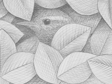 1. Silverpoint Drawing by Nick Hunter - Sheffield