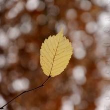 5. When I Fall, I'll Fall For You - Sheffield November 2014