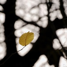 9. When I Fall, I'll Fall For You - Sheffield November 2014