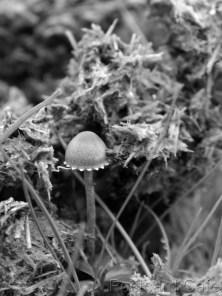 3. Fungi Friday - November 2014