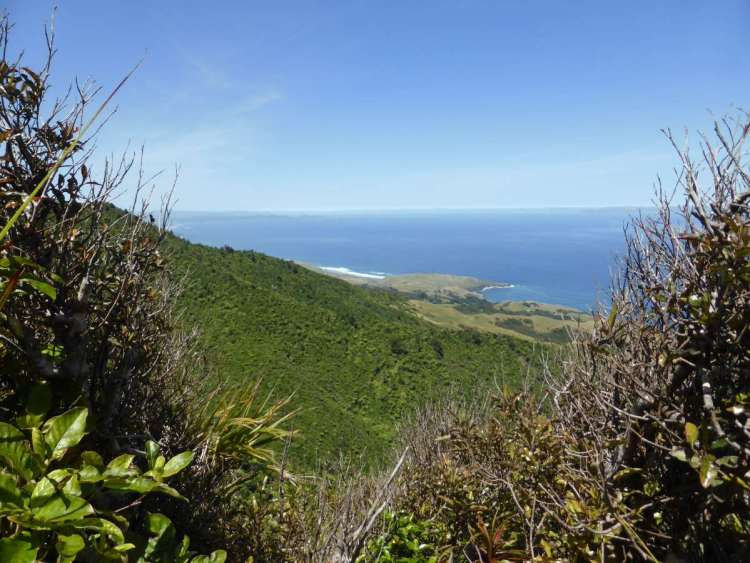 mt karioi track looking south