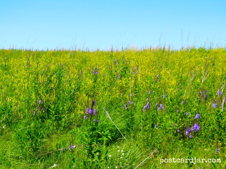 Prairie grasses and wildflowers in Nebraska. (photo by Ann Teget for www.postcardjar.com)