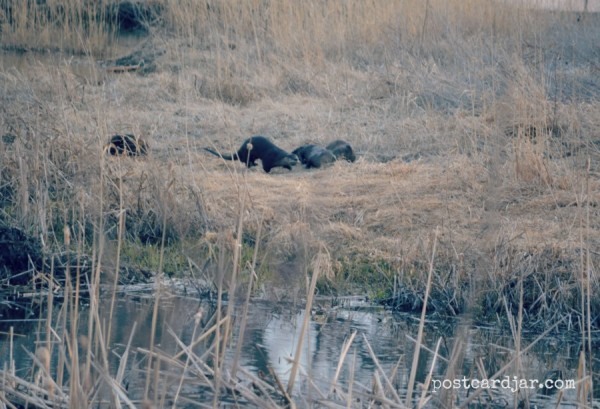 I was thrilled to see river otters in their natural habitat for the first time.