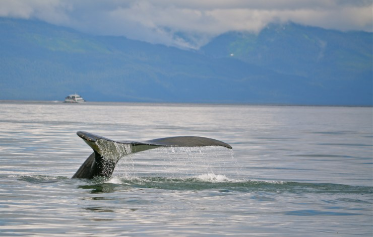"""Our whale watching tour was amazing. When we got back to shore, Steve asked Ann, """"So who did it feel to be in photographer's heaven?"""""""