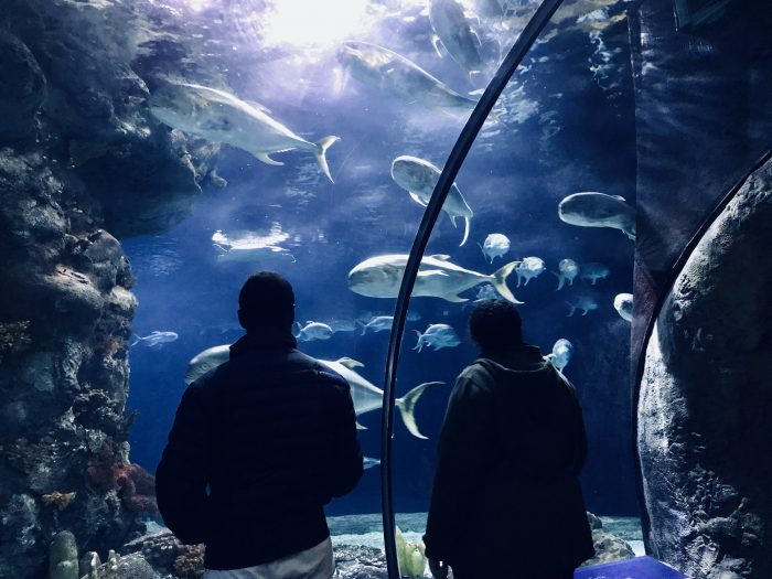 Aquarium, Henry Doorly Zoo, Omaha, Nebraska