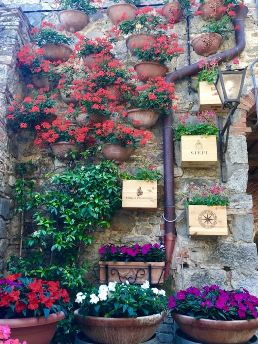 Tuscan flowers at a winery