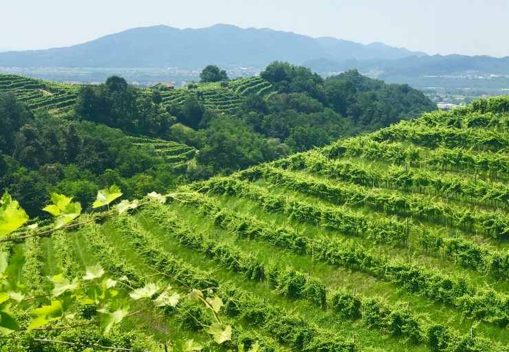 Valdobbiadene was unlike any other wine region we'd ever scene. The vines followed the terrain we were never more than a stone's throw away from a winery.