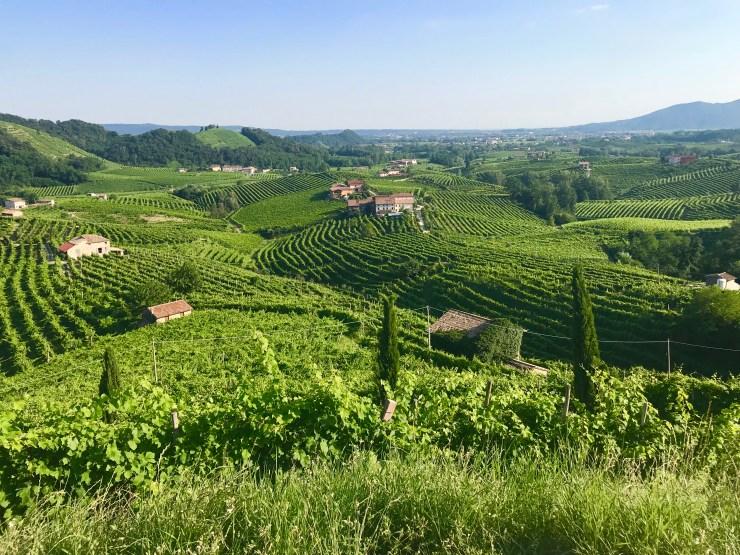 Prosecco region, Valdobbiadene, Italy