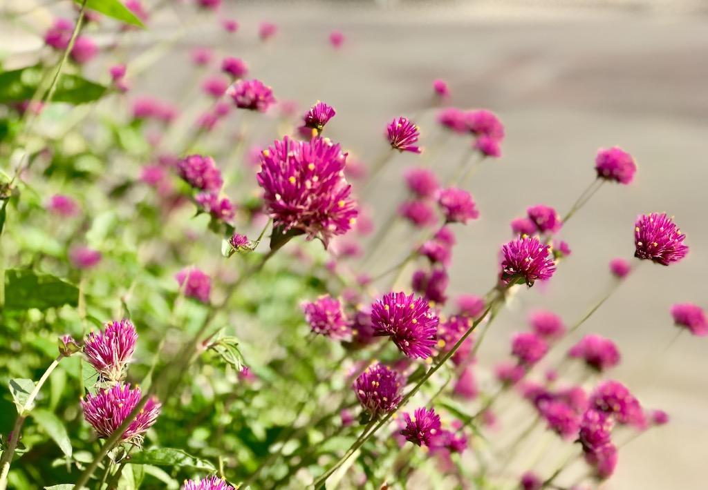 Grinnell Iowa Flowers