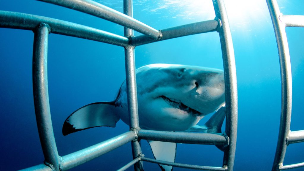 Things to do before kids bucket list Cage Dive with Sharks