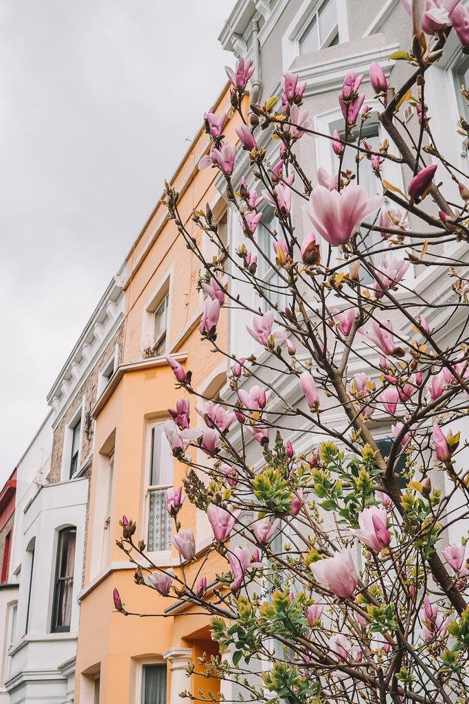 Notting Hill Magnolia