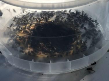 Honey Jar 1 (1280x960)