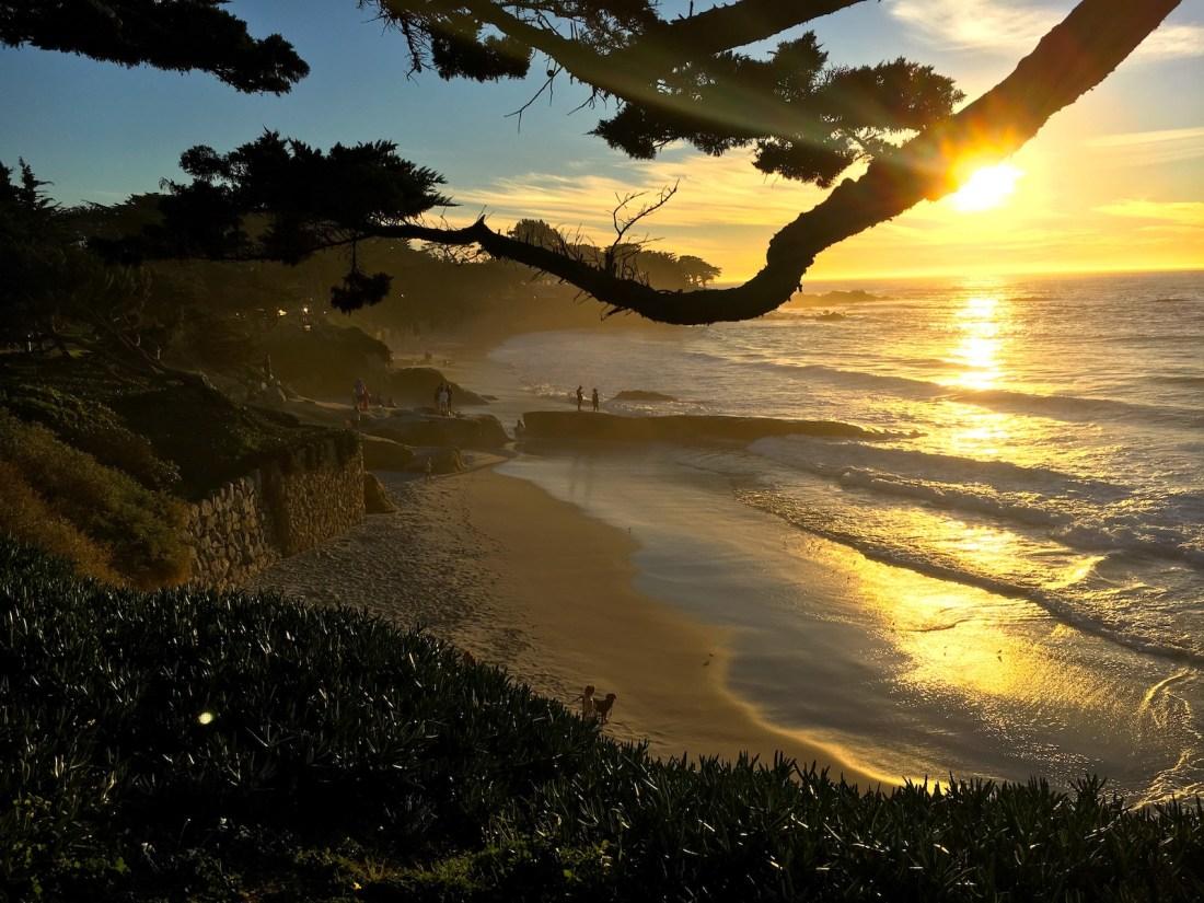 Highway 1, Roadtrip, Ocean, Sunset, Tree, Beach