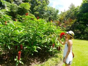 Australia, Botanic Gardens, Flowers