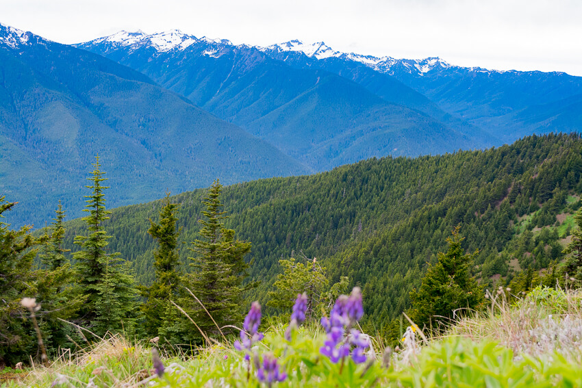 10 Reasons to Visit Olympic National Park flowers