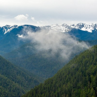 10 Reasons to Visit Olympic National Park fog