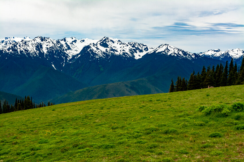 10 Reasons to Visit Olympic National Park valley