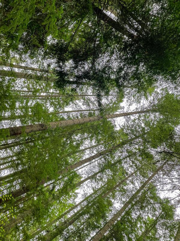 grand forest bainbridge