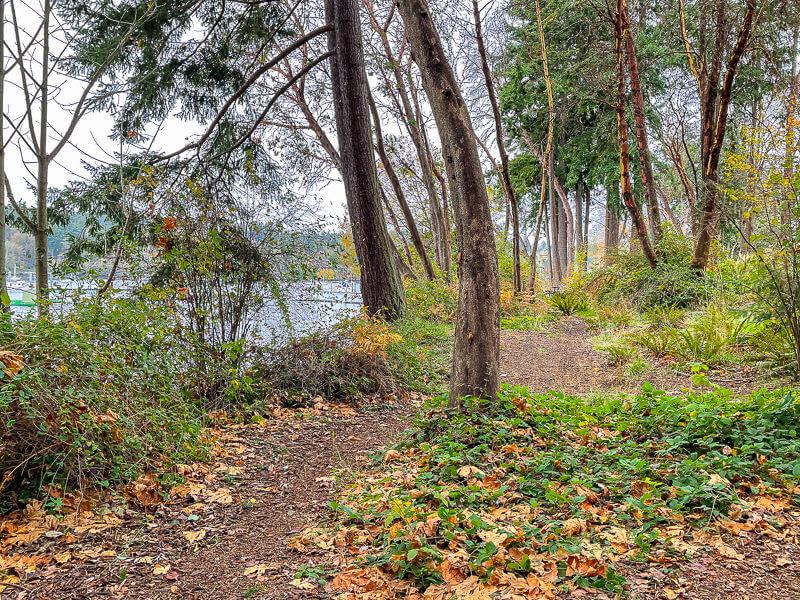 waterfront trail bainbridge
