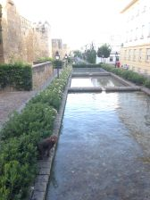 The old city walls and one of the two dogs that frolicked in the water as we watched