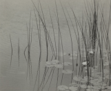 Himoru Kira, Decorations - Water Plant, 1926, gelatin silver print