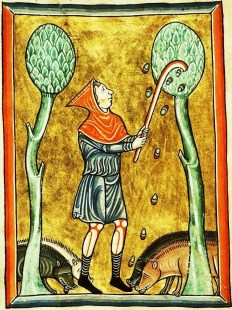 Peasant knocking down acorns. He is wearing a simple belted tunic and a hood. c. 1180