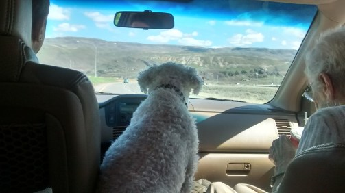 Grandma, mom, and dog roadtrip. Gotta love it!