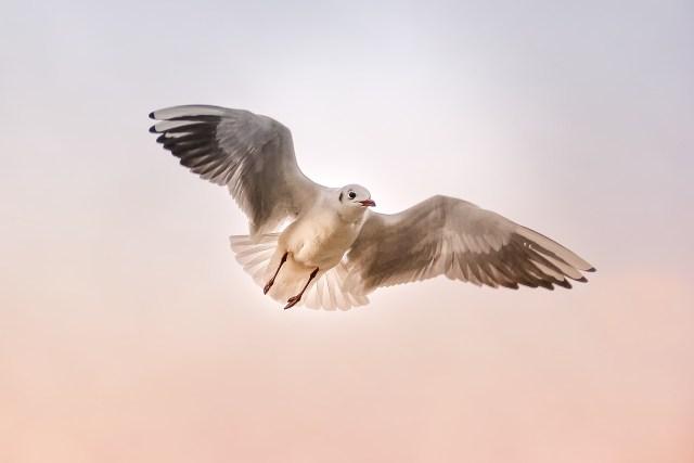 She is my Bird