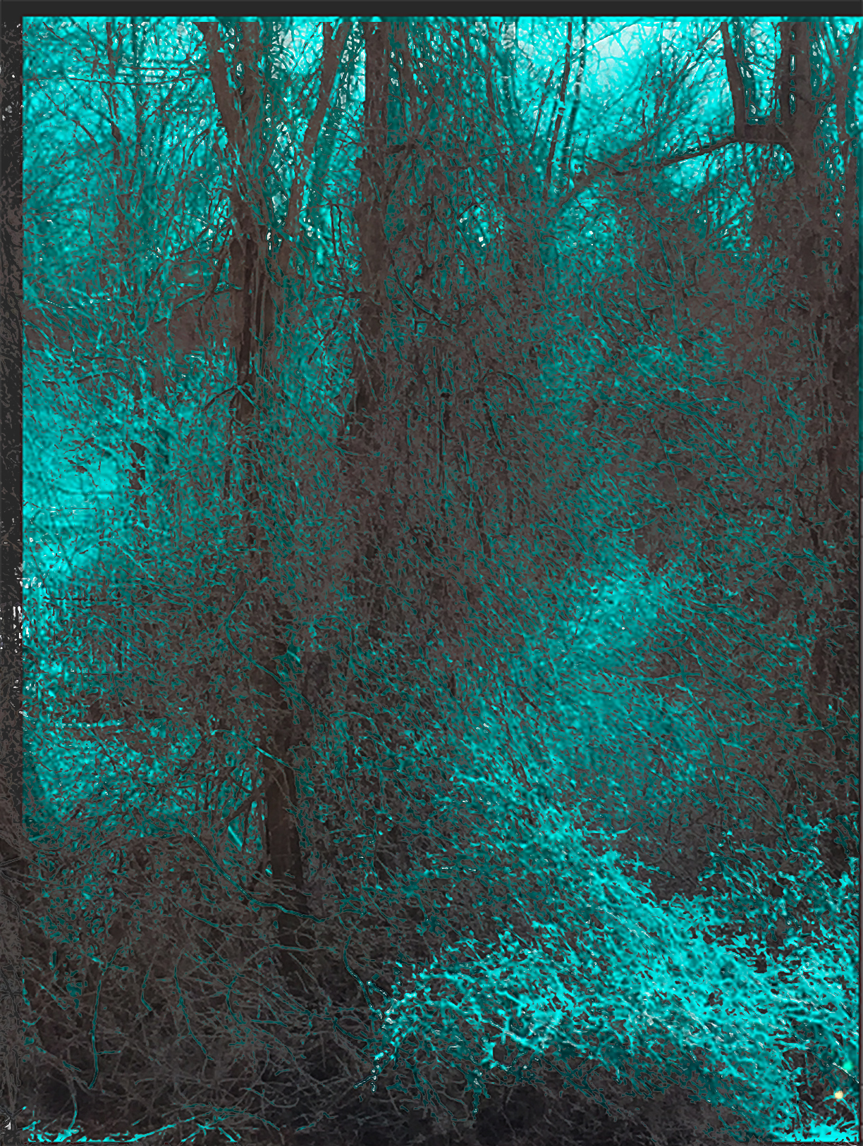 An image of trees on a textured, teal surface.